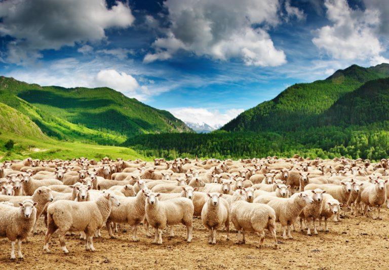 Artigo 265 – Somos produtos do meio?